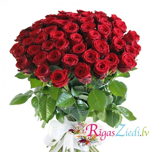 51 long, red premium rose