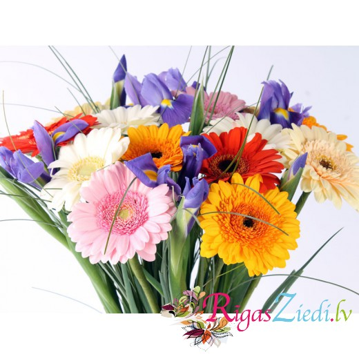 Different color gerberas with blue irises