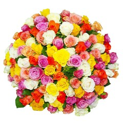 101 different color rose 40-80cm