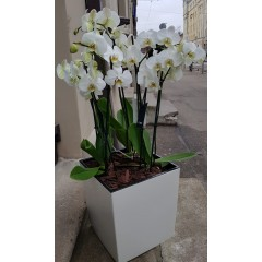 Orchids in a flower pot