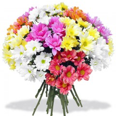 Chrysanthemum bouquet Colorful