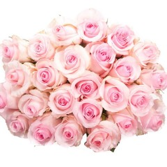 Pink rose bouquet (variable number of flowers and length)
