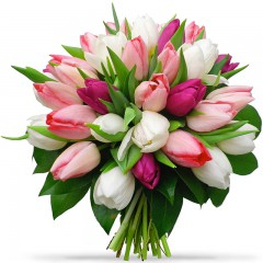 Tulip bouquet of white and pink tulips