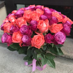 51 salmon-colored and purple roses
